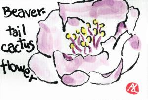 Beavertailcactusflower.2014-03-30