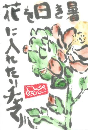 Globemallow.BashoHaiku.29June2014