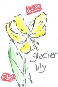 GlacierLily.1.lownijimi.2014-07-05